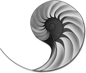 Why The Nautilus Shell?